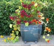Oleander Pot