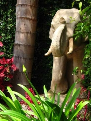 Poolside Elephant