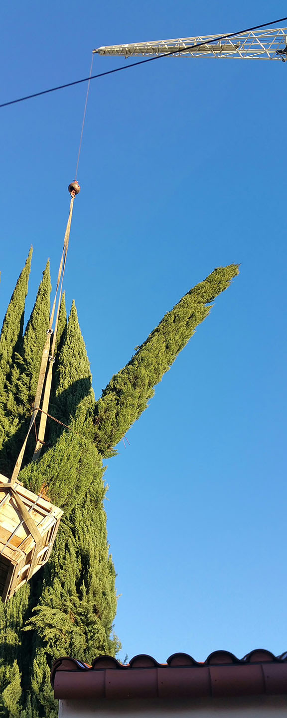 Delivery of Italian Cypress to client's house, Darsaya Studio.