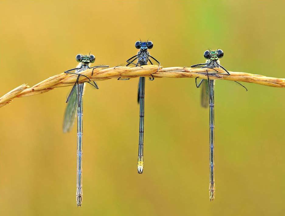 Dragonflies, Darsaya Studio, landscape design