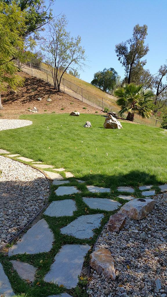 West Hills Buffalo Grass, Darsaya Studio
